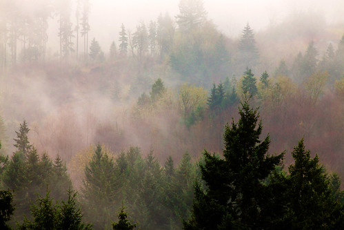 trees color fog forest woodland landscape washington wa canonef70200mmf28lisusm canonextenderef2xii canoneos5dmarkii canon5dmarkii