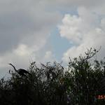Miami, Everglades 03