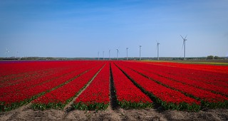 Fields of red | by http://www.paradoxdesign.nl