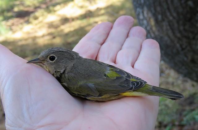 A Bird in My Hand