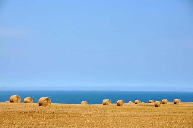 Wheat and Sea