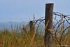 Les vestiges du passé à Utah Beach