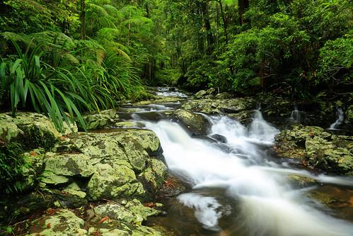 longexposure water beautiful creek canon flow rainforest scenic australia jungle nsw newsouthwales byron cascade byronbay worldheritage nightcapnationalpark subtropicalrainforest canon5dmkiii