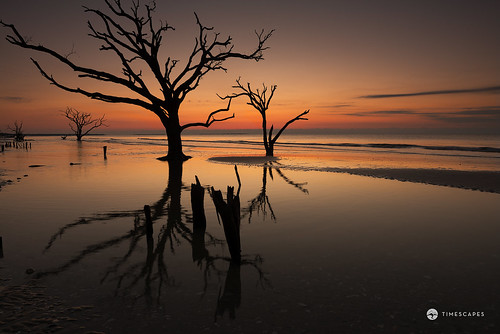 reflection beach nature sunrise outdoors sand solitude southcarolina destination orangesky atlanticocean edistoisland deadtrees timescapes bernardchen boneyardbeach botanybayplantation