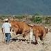 Arrando con yunta - plowing with oxen; cerca de Zoogocho, Districto Villa Alta, Oaxaca, Mexico por Lon&Queta