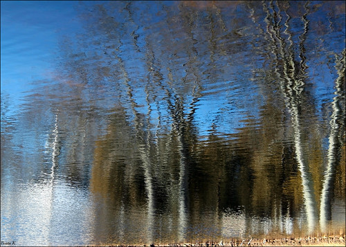 blue trees sky nature water grass pond bluewater bluesky ripples waterreflection waterreflections pondreflection waterripples pondreflections johnstonri johnstonwarmemorialpark