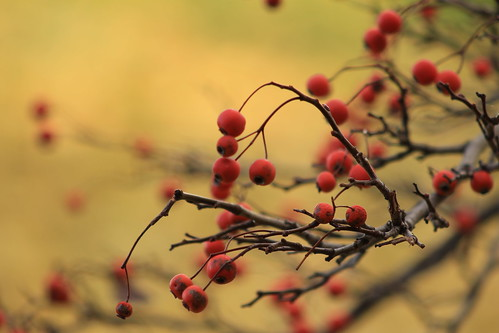 Fruits | by Always Shooting