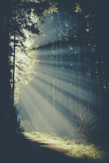Morning light in the forest
