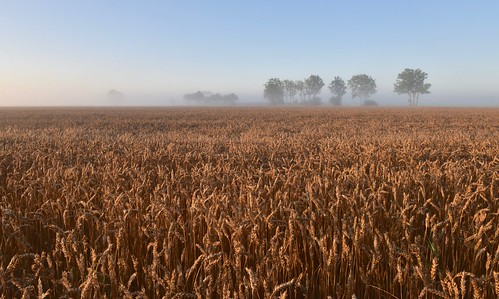 groningen platteland graan koren sunrise mist