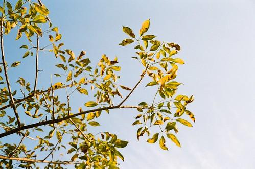 Leaves   by eva.