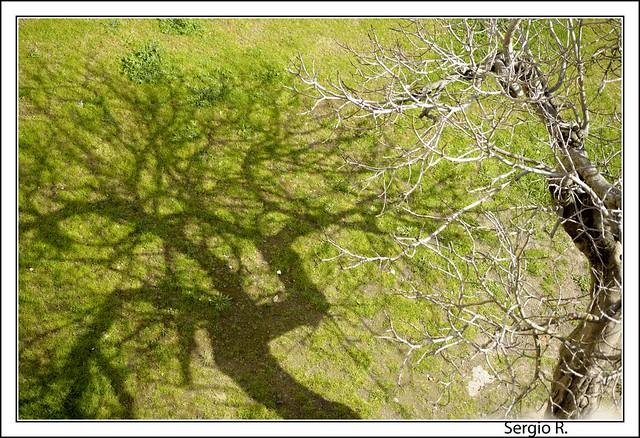 El árbol y la sombra IV