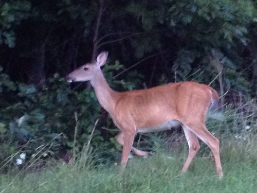 park summer river james state wildlife deer viewing