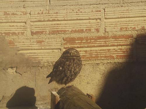 Owl in Spanish Wildlife Sanctuary   by Rayya The Vet
