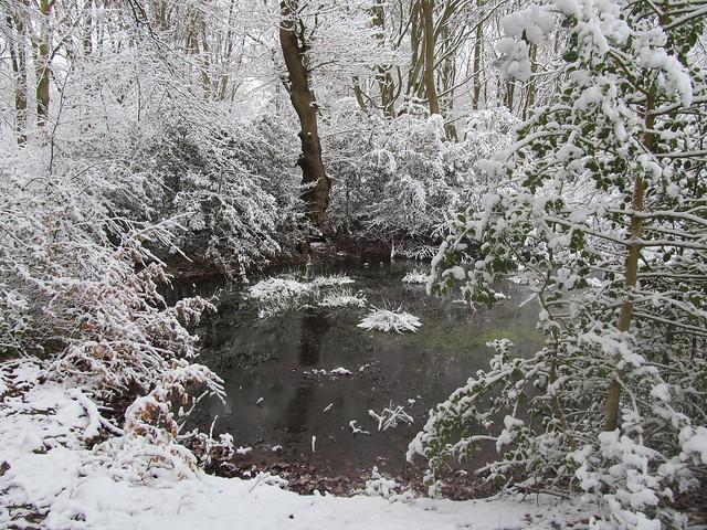 Shipwash Pond in Snow