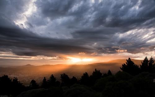 trees sunset newzealand clouds landscape golden árboles cities silhouettes paisaje paisagem dourado ciudades pôrdosol nubes nuvens dunedin sunrays dorado árvores novazelândia cidades puestadelsol rayosdesol nuevazelanda silhuetas raiosdesol 2013