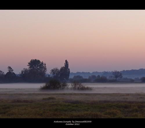 trees sunset sky plants mist nature fog landscape evening meadow poland polska warta