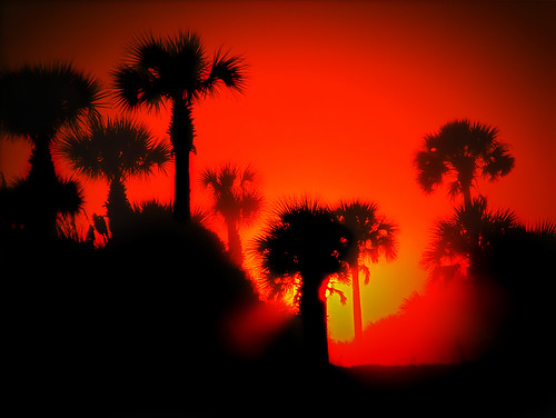 sunset tree silhouette florida palm pontevedrabeach