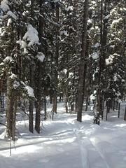 金, 2013-03-01 13:29 - Enchanted Forest