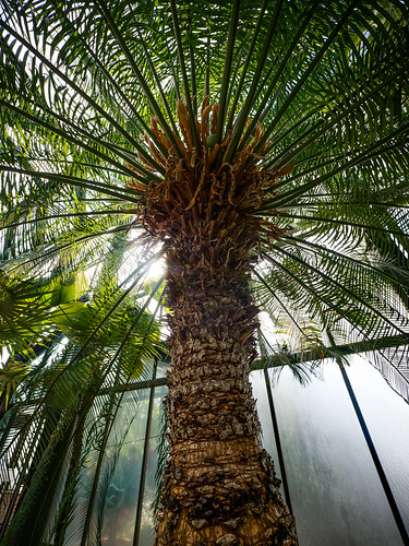 Panasonic 7-14mm Test: Queen Palm Halo | by Entropic Remnants