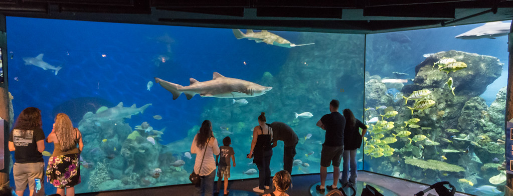 Denver Aquarium Shark tank   Dave Dugdale   Flickr