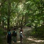 Guatemala, Ruinas de Tikal 35