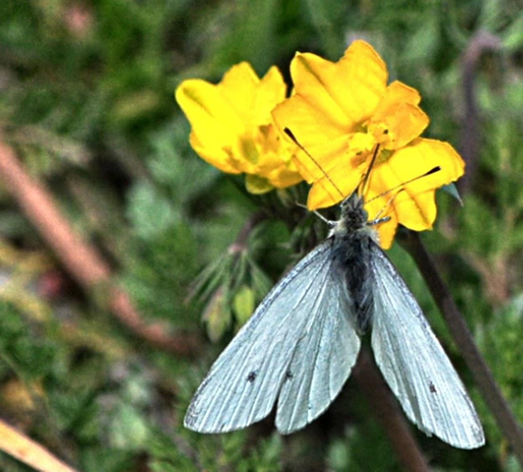 DSC_2794-3- Kingdom: Animalia / Phylum: Arthropoda Clase I ...