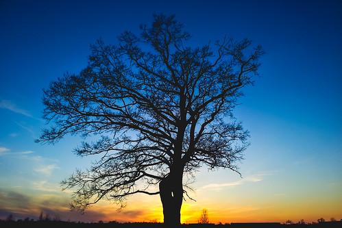 sunset galaxy s2 mobile tree evening urban nature explore explored silhouette landscape clouds panevėžys panevezys