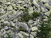 Svah nad Bílým Labem, foto: Petr Nejedlý