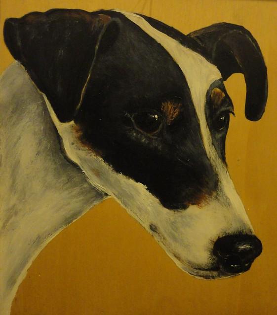 Smooth Fox Terrier - Fox Terrier a pelo raso