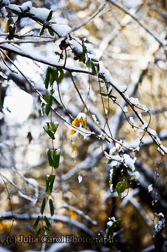 morning winter sun lake snow tree ice reed leaves sunrise leaf nc branch north greensboro carolina brandt rise greenway triad