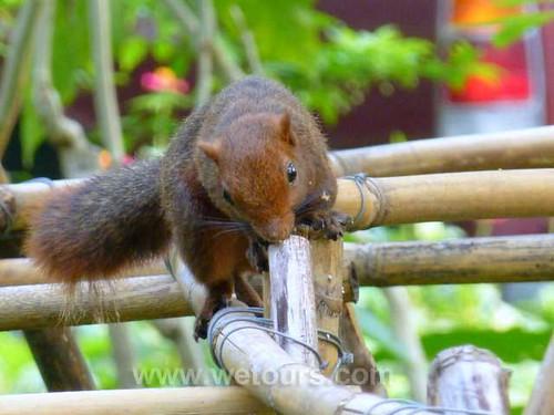 Bangkok Squirrel   by WeTours