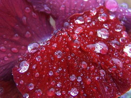 Rain Drop Polka Dots