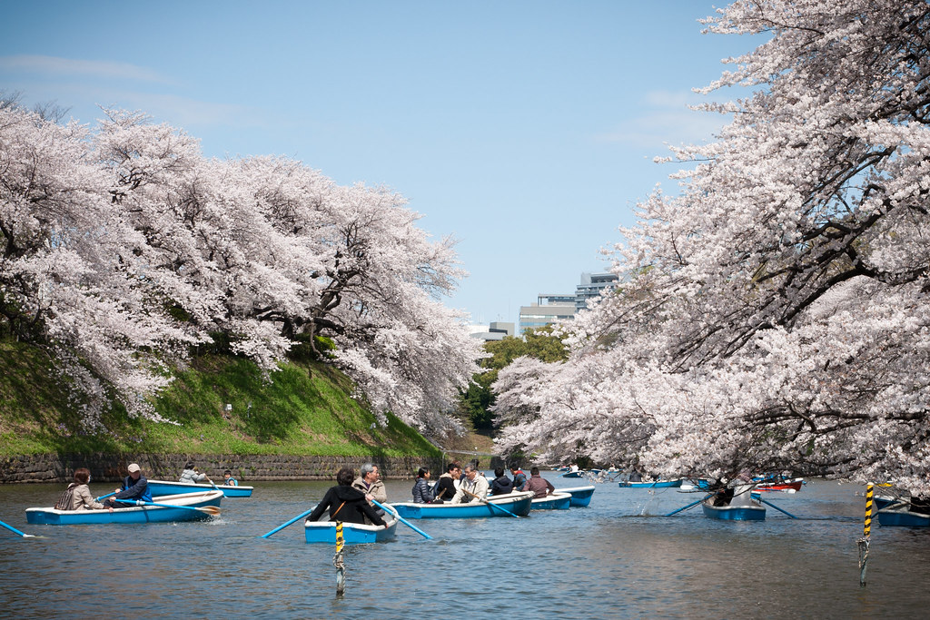 Sakura season traffic