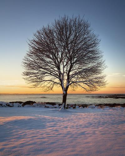 winter light snow color tree sunrise canon newcastle landscape dawn coast scenery scenic newengland newhampshire nh scene coastal shore seacoast winteronthecoast 5dmarkii greatislandcommons ericgendron