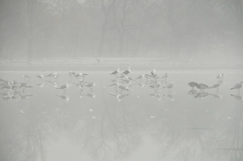 Birds On Ice | by HorsePunchKid