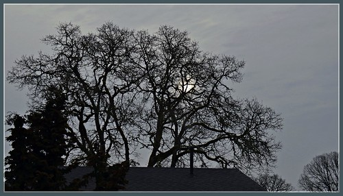 cold oregon sunrise dawn oak nikon gray overcast oaktree hillsboro washingtoncounty d7000