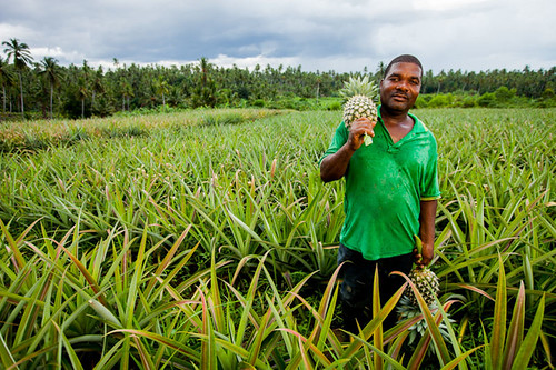 Zanzibar Man Grows High-Value Pineapples | by USAID_IMAGES