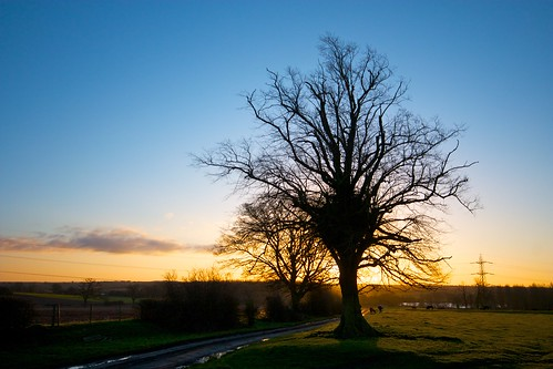 sun tree sunrise day alba clear sole albero