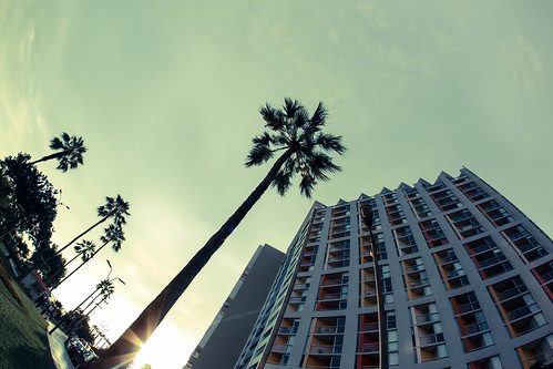 The Palm, Miraflores | by Geraint Rowland Photography