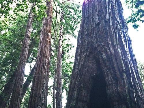 advocates tree