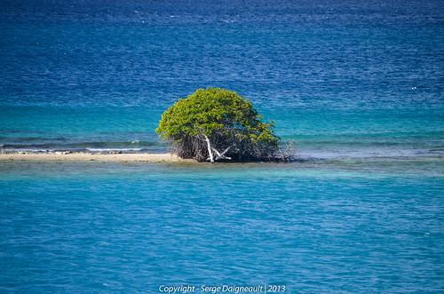 cruise seascape tree aruba oranjestad caribbeanislands celebrityeclipse nikond5100 sigma1802500mmf3563 caribbeanislandscruise2013