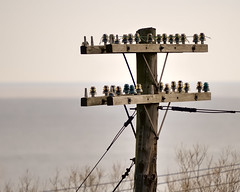 Abandoned railway telegraph pole with insulators - Port Hope, Ontario