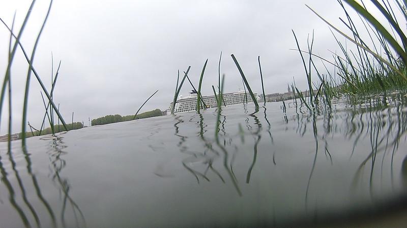 Looks like shipwreck -  The World Cruise ship - Bordeaux - 26 avril 2013