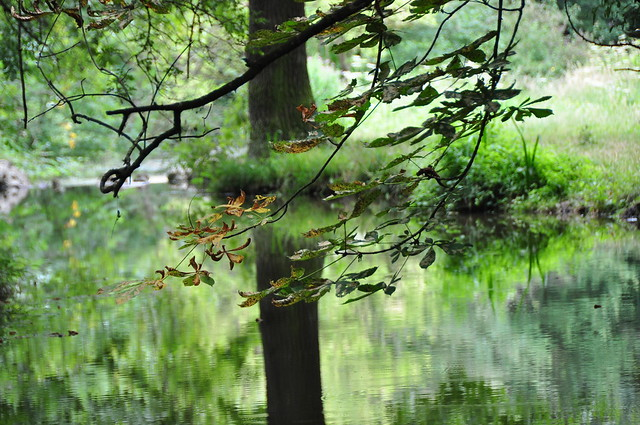 Nature in Summer , (Abstract and reflection)