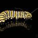 Monarch Caterpillar by jciv