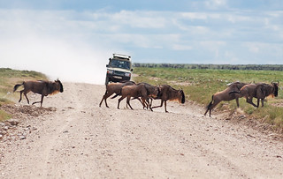 wildebeest-crossing   by quirkytravelguy