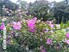 Macro no jardim