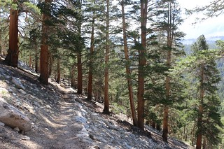 1022 Hiking downhill through tall pines on my way toward Wallace Creek on the John Muir Trail | by _JFR_