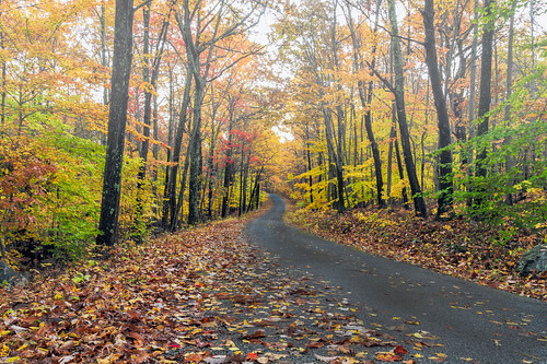 road autumn trees fall leaves fog landscape photography sussex photo leaf newjersey woods seasons unitedstates foggy collection collecting select publish arboriculture publishblog publishflickr collectionforests collectionfallcolors