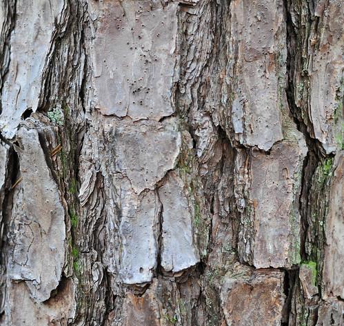 Tree Bark | by Doug NC